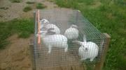 Клетки. Сетка. Ниппельные поилки кролик. Поилка птица.