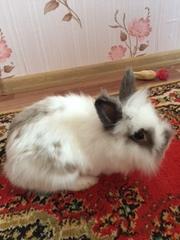 Продаю декоративных мини крольчат (белый)