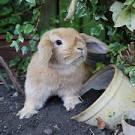 навоз от кролика-хорошее удобрение