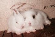 Декоративные кролики. питомник. доставка. привиты