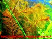 Перестолистник красный и др. растения. НАБОРЫ растений для запуска акв