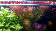 Лимнофила ароматика.. НАБОРЫ растений для запуска. ПОЧТОЙ и МАРШРУТКОЙ