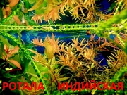 Ротала. Наборы растений для запуска и перезапуска аквариума. Почтой=