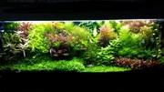 Удобрения(микро,  макро,  калий,  железо) для аквариумных растений.. ПОЧ=