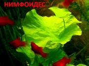 Нимфоидес. Наборы растений для запуска и перезапуска аквариума. Почто=