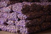 Картофель  из Беларуси оптом от производителя