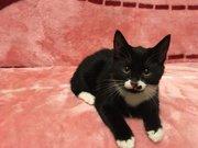 Замечательный черный котенок