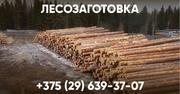 Закупаем лес на корню
