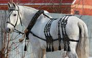 Упряжь для лошадей