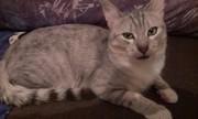 котик даром