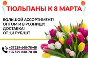 Тюльпаны по лучшим ценам. Опт и розница