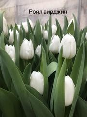 Свежие цветы Белорусского производства оптом