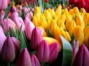 Шикарные Готовые букеты к 8 марта оптом для организаций.