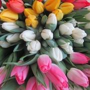 Букеты из тюльпанов Экстра класса к 8 марта,  предзаказ
